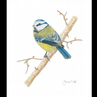 BLUE TIT - Wildlife Bird Greetings Card - Blank Inside