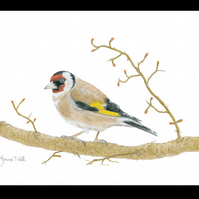 GOLDFINCH - Wildlife Bird Greetings Card - Blank Inside