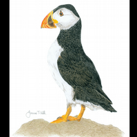 PUFFIN - Wildlife Bird Greetings Card - Blank Inside
