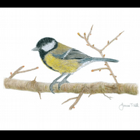 GREAT TIT - Wildlife Bird Greetings Card - Blank Inside