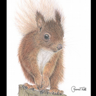 RED SQUIRREL ON A LOG - Wildlife Greetings Card - Blank Inside