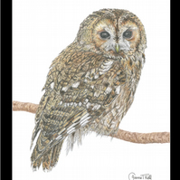 TAWNY OWL  - Wildlife Greetings Card - Blank Inside