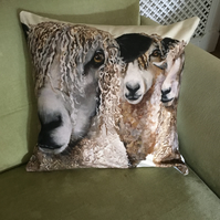 Sheep Cushion cover only