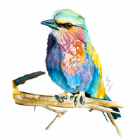 Original Watercolour Painting, Bird, Art
