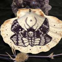 Hand decorated scallop shell : Moth