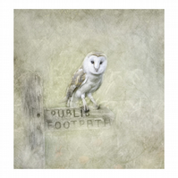 'Barn Owl On Post'