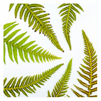 Greeting Card - Fern Spiral