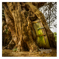 Greeting Card - The Crowhurst Yew