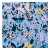 Greeting Card - Butterfly & Beetle Collection