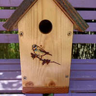 Bird house or nesting box Blue tit on Branch