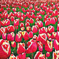 Field of Red Tulips, Birthday Greeting Card