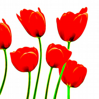 Bright Red Tulips Greeting Card