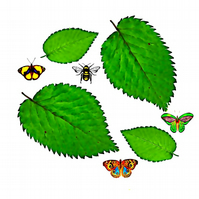 Greeting Card, Elm Leaves, Butterflies, Bee Scene