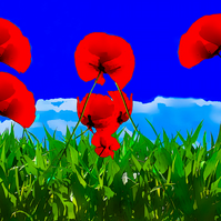Poppies in Green Grass, Greeting Card