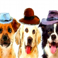 Three Dogs in Three Hats, Unusual Geeting Card