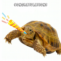 Tortoise Congratulations Greeting Card, Funny