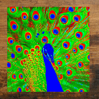 Peacock Greeting Card, Vibrant