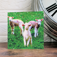 Lambs in a Field, Greeting Card