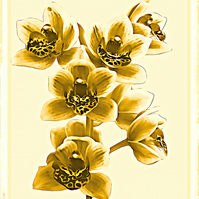 Orchids Greetings Card