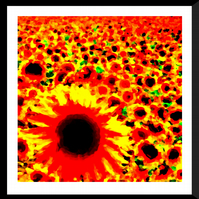 Field of Sunflowers Giclée Print
