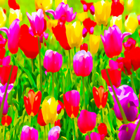 Tulips, Birthday, Greeting Card