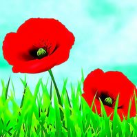 Poppies in Green Grass, Birthday Card