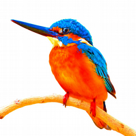 Kingfisher Birthday Card
