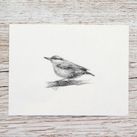 Original Pencil Drawing - Nuthatch 2