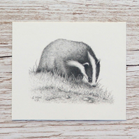 Original Pencil Drawing - Badger 2