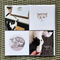 cat collection of 4 cards