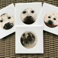 Baby Seal collection