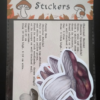 Mushroom Sticker Set- Edible Mushrooms