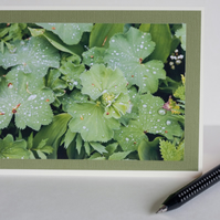 Photographic blank greetings card - Raindrops on leaves