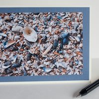 Photographic blank greetings card - Close up of shells on a beach