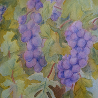 Original watercolour painting bunches of purple grapes on vine