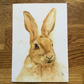 A5 blank card of Harlyn Hare - Free UK post