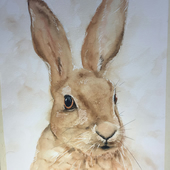 The Cornish Hare