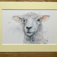 A4 mounted print of Samphire Sheep - free UK postage