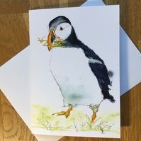 A5 blank card of my original puffin watercolour- free UK postage