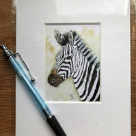 'Zebedee Zebra' Mounted print of miniature watercolour - FREE UK POST