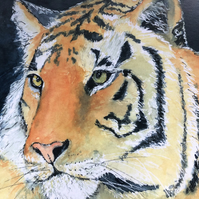 A4 or A3 mounted print of Tiberius Tiger  from my original watercolour