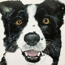 A4 or A3 mounted print of Carbis the Collie  from my original watercolour