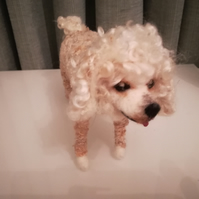 Poodle, minature, dog, pet, needle felted wool sculpture poseable