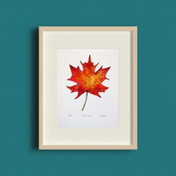 Maple Leaf Giclée Print, Ltd. Edition - A stunning gift for nature lovers