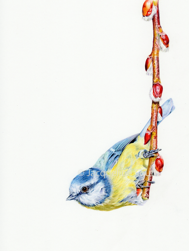 Blue Tit limited edition print