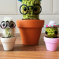 Mini Cactus! Crochet Cactus, Furry, Cactus, Flower, Glasses, Miniature, Surprise