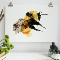 British Great Yellow Bumble Bee Art Print