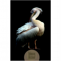 Grooming Pelican Portrait, Colour Print, Fine Art Wall Print