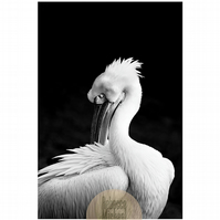 Grooming Pelican Portrait, Black and White Print, Fine Art Wall Print