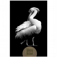 Pelican Portrait, Grooming, Black and White Print, Fine Art Wall Print